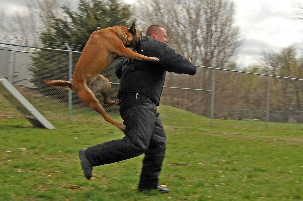 Cómo protegerse de los ataques de perros